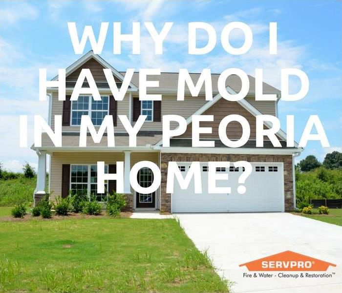 Mold Remediation Why Do I Have Mold In My Peoria Home?