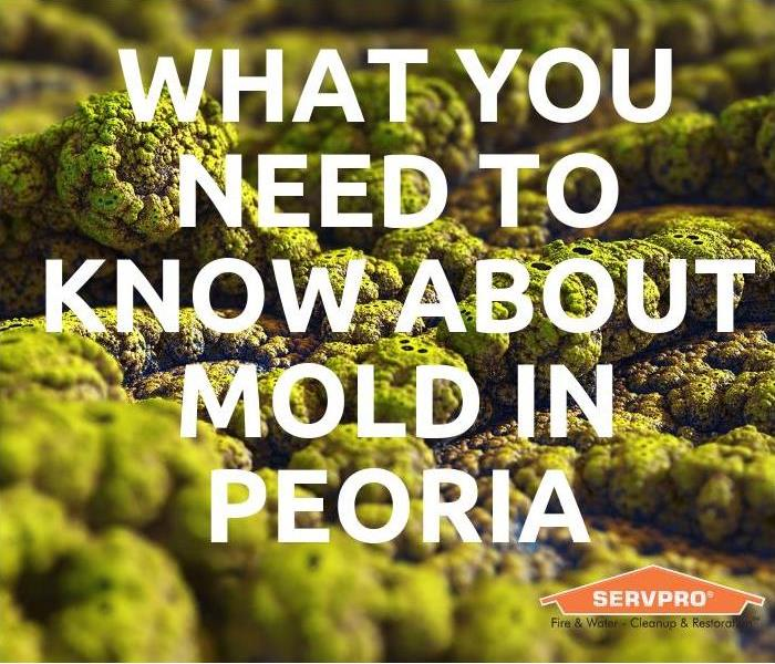 Mold Remediation What you need to know about mold in Peoria
